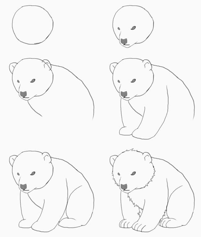 Polar bear drawing for kids