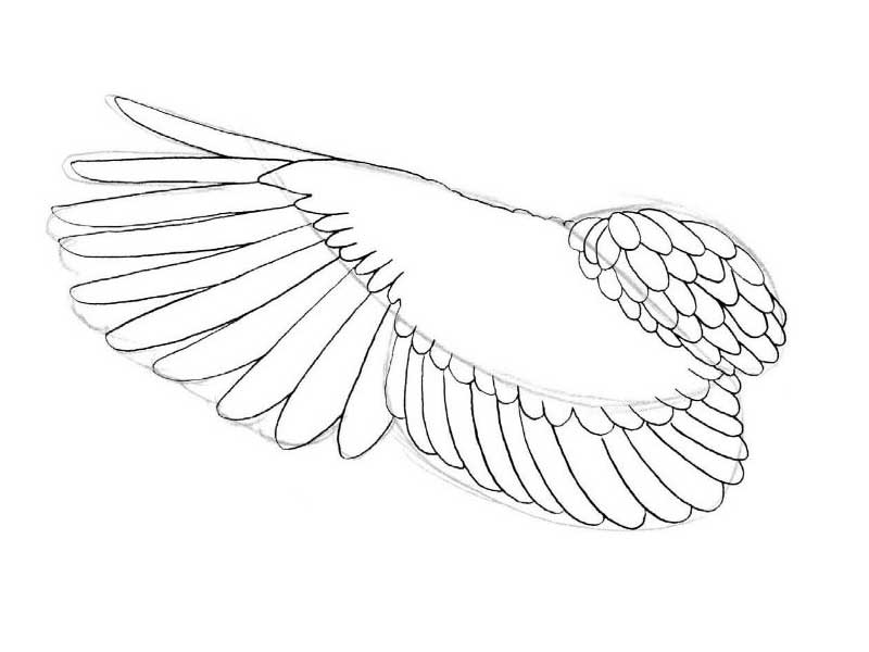 bird wings template